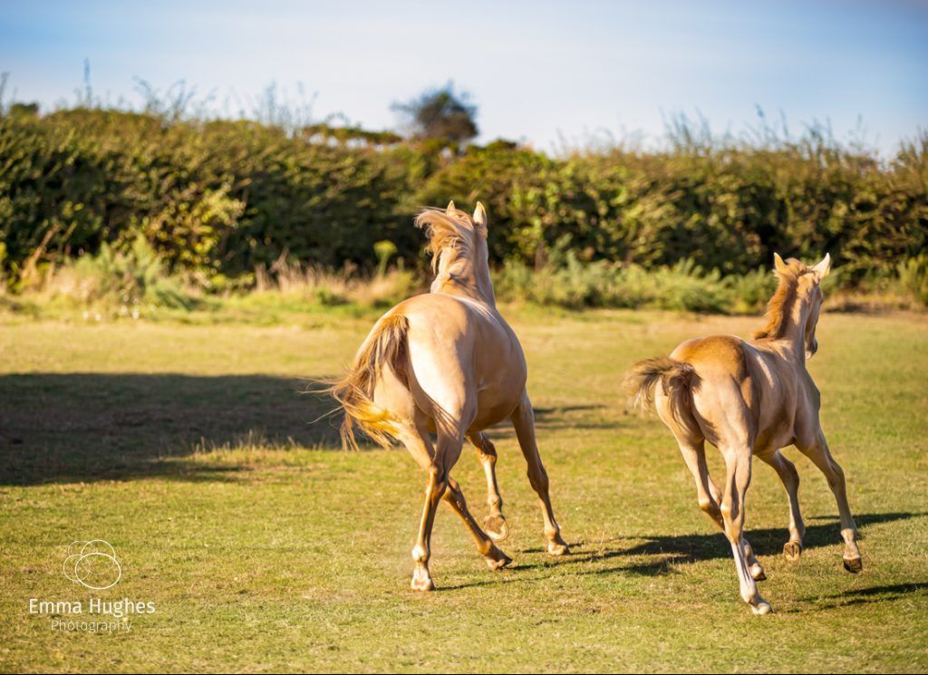 Mare and foal in the New Forest