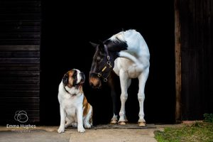 Animal Only Photoshoot Dog and Horse